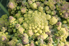 Romanesque Broccoli has a geometry pattern close to a fractal stock photos