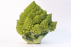 Romanesque cabbage against white Stock Images
