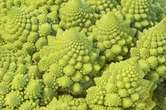 Romanesque cabbage fractals Royalty Free Stock Photography