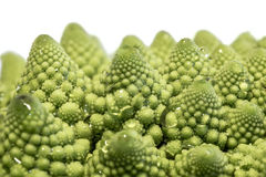 Romanesque cabbage tips Royalty Free Stock Photos