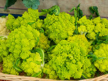 Romanesque cauliflower Stock Photo