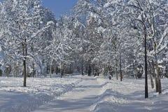 Romanesu Park Lizenzfreie Stockfotografie