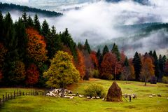 Romania beautiful landscape , autumn in Bucovina with shepherd. Romania beautiful landscape , autumn scene in Bucovina with shepherd house and autumn trees and royalty free stock images