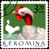 ROMANIA - CIRCA 1963: Postage stamp printed in Romania, shows cock Stock Photography