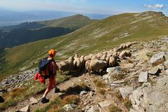 Romania, hiking with sheep Stock Photos