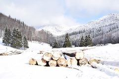 Romania Mountains and forests in January. Trekking on Ciucaș Mountains in winter, while all white and snowy, at Valea Berii Royalty Free Stock Image