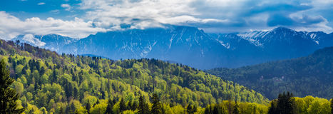 Romania, Predeal. the snowy Bucegi mountains and the green forests at their base seen from Predeal. Panorama with the snowy peaks of the Bucegi mountains and the royalty free stock photo