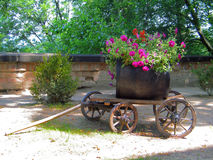 Romania. Sighisoara. Summer in Romania. Flowers composition Stock Images