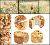 Romania  traditional bread collage. Collage with isolated traditional romanian homemade bread and wheat field Stock Images