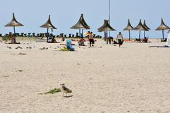 Romanian beach in Dobrogea Stock Photos