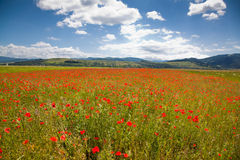 Romanian countryside with poppy field Royalty Free Stock Photography