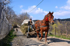 Farmer with horse and carriage hay in Romania
