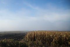 Romanian farmland. Morning mist on romanian farmland stock photo