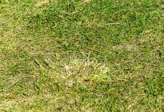 Romanian grass. Green grass on a field Royalty Free Stock Photo