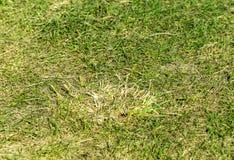 Romanian grass. Green grass on a field royalty free stock photo