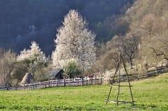 Romanian landscape. Beautiful scene in Romanian Carpathians with trees in bloom stock photography