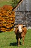 Romanian mountain farm landscape Royalty Free Stock Image