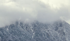 Romanian mountains range with pine forest and fog, winter time Royalty Free Stock Photo