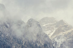 Romanian mountains range with pine forest and fog, winter time Stock Photo