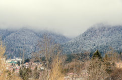 Romanian mountains range with pine forest and fog, winter time Stock Image