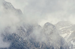 Romanian mountains range with pine forest and fog, winter time Royalty Free Stock Photography