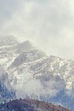 Romanian mountains range with pine forest and fog, winter time Royalty Free Stock Image