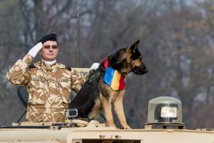 Romanian national day parade with canine unit and military salute Stock Photos