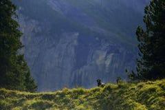 Romanian shepardhund för galande i Kandersteg berg switzerland Arkivbilder