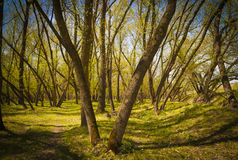Romanian spring forest Stock Photos