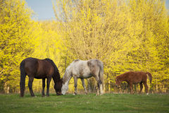 Romanian village landscape with horses Royalty Free Stock Photo