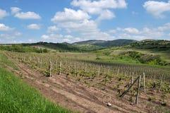 Romanian vineyard Royalty Free Stock Photos