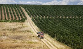 Romanian wineyard hills Royalty Free Stock Photography