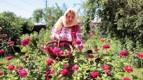 Romanian Woman Gardening stock footage