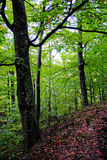 Romanian woods. Trees in the Cozia National Park, Valcea county, Romania, on an autumn evening Stock Photography