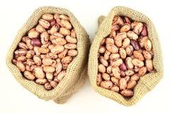 Romano Beans. Stock Photo