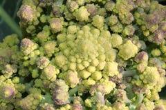 Romansk broccoli har en geometri att mönstra nästan en fractal Arkivfoton