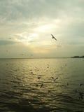 Romansk solnedgång på smällbajset i natur Arkivfoto