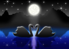 Romantic. Pair of the swans on night lake in light of the full moon Stock Photography