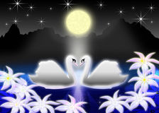 Romantic. Pair of the swans on night lake in light of the full moon Stock Photo