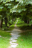 Romantic Alley. Small Footpath in a romantic Alley in Summertime Stock Photos
