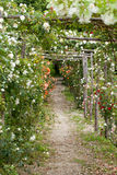 The romantic alley-way in the pergola from roses. stock image