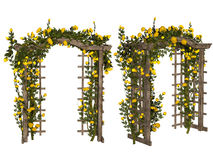 Romantic arbor with  yellow roses Royalty Free Stock Photo