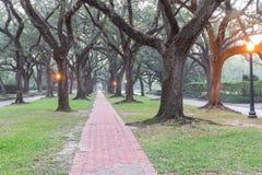 Oak tree tunnel foggy morning Houston, Texas, USA Stock Image