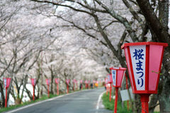 Romantic archway of pink cherry tree (Sakura) blossoms and Japanese style lamp posts along a country road Royalty Free Stock Photo