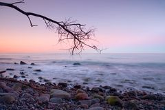 Romantic atmosphere,  colorful sunset at sea. Stony beach with bended tree and hot pink sky in water mirror. Royalty Free Stock Images