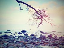 Romantic atmosphere,  colorful sunset at sea. Stony beach with bended tree and pink sky Stock Photography