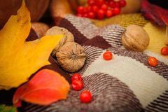Romantic autumn still life Royalty Free Stock Photography