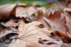 Romantic autumnal mood. Poetic background image of autumn fall leaves stock photo