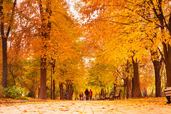 Romantic Autumnal park walking. Couples walking at a colorful autumn park at sunset Royalty Free Stock Images