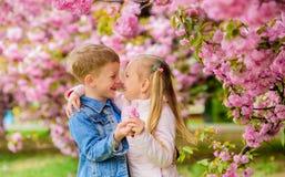 Romantic babies. Tender love feelings. Couple kids on flowers of sakura tree background. Little girl enjoy spring. Flowers. Giving all flowers to her royalty free stock images